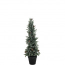 Pine pine, potted, with cones, H55cm, green bes